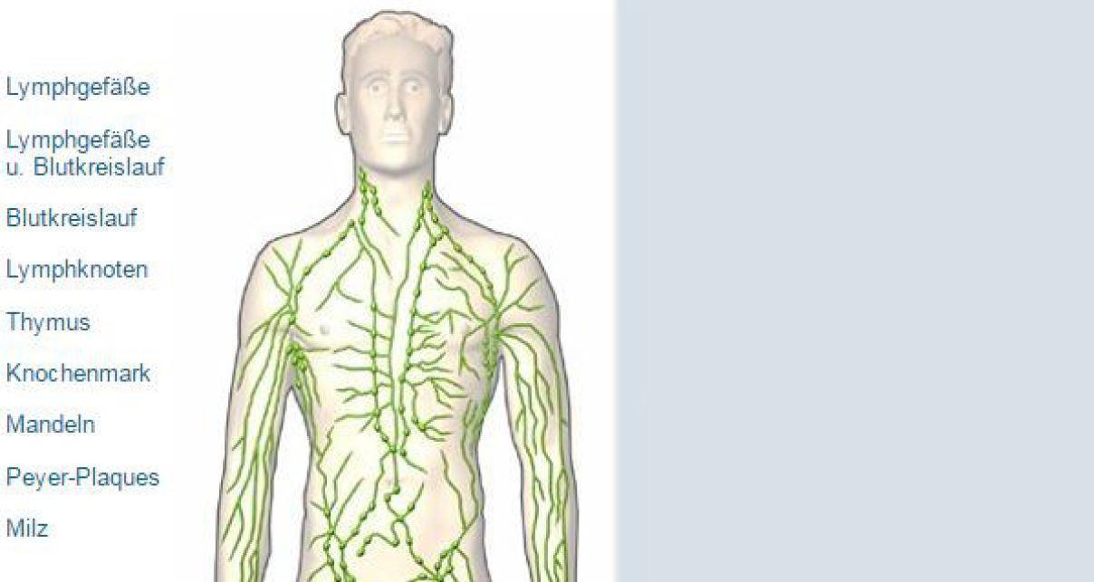 Niedlich Menschliche Anatomie Und Physiologie Des Lymphsystems ...